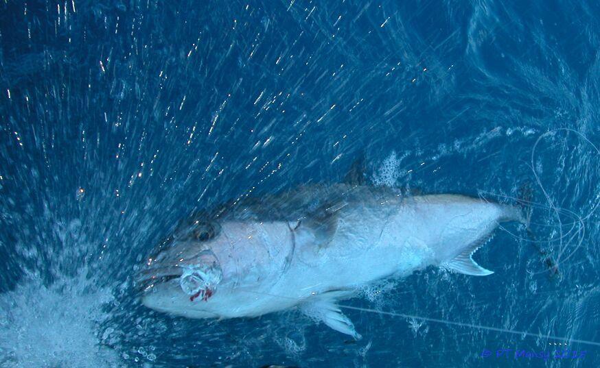 Hawk Channel, Florida Keys, Fish On