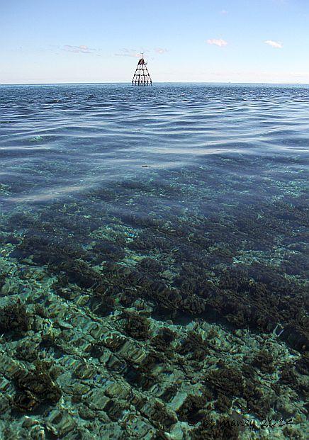hawk_channel_com_molasses_reef_light_10_IMG_4812 Molassas Reef