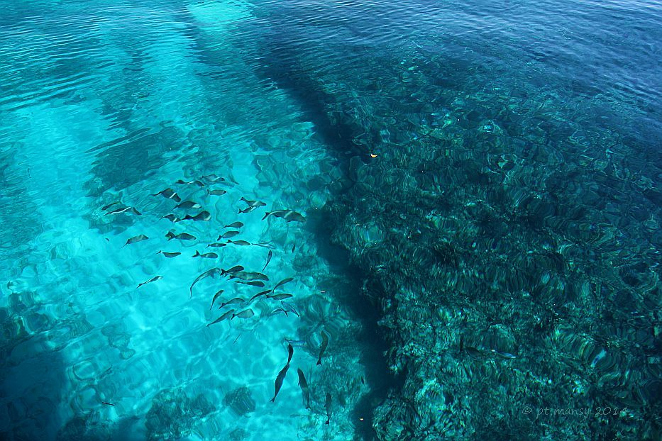 hawk_channel_com_pickles_reef_area_IMG_5324